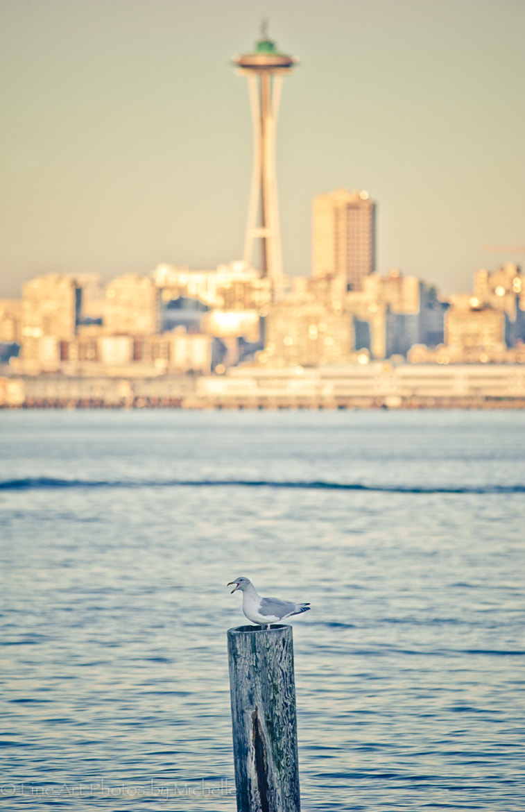 Photograph Seattle Seagull by Michelle Stevenson on 500px