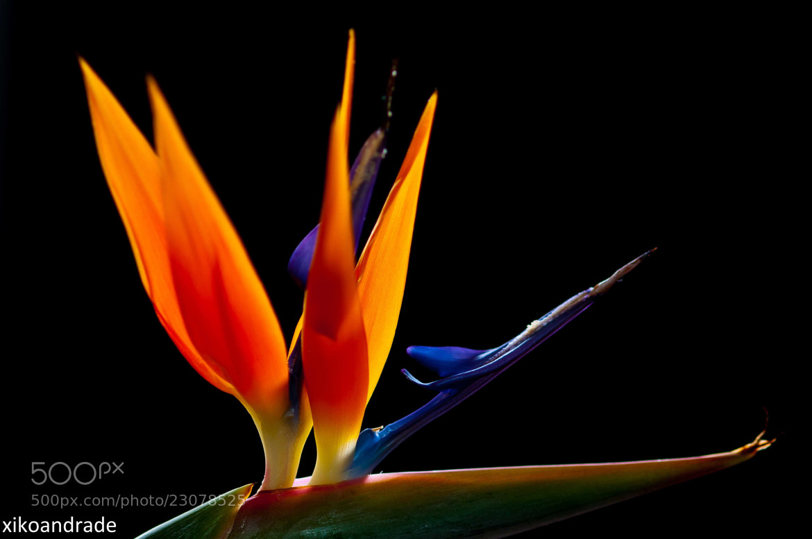 Photograph Elegância floral by FRANCISCO ANDRADE on 500px