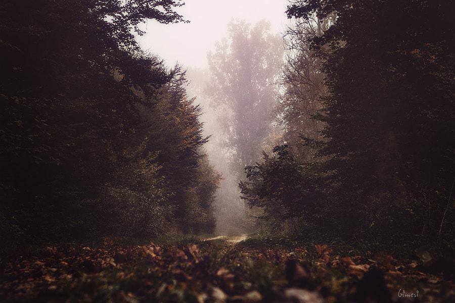 autumn, автор — Attila Gimesi на 500px.com