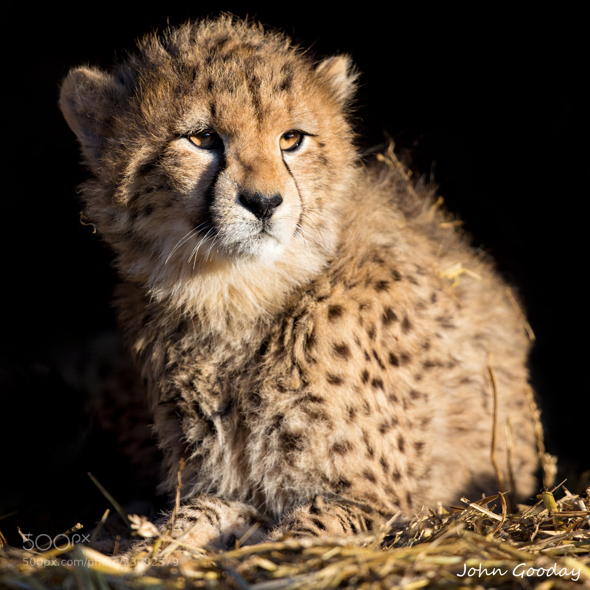 Photograph Zoo baby by John Gooday on 500px