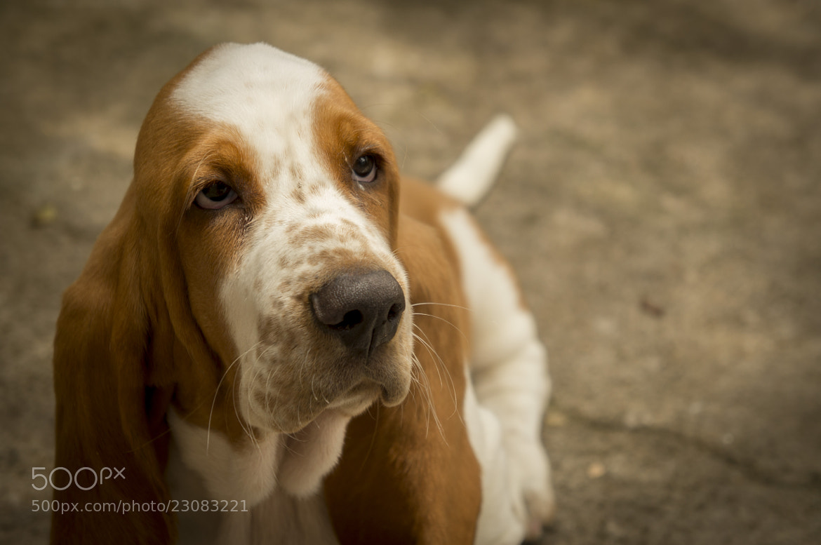 Photograph Freud -  The dog! by José Neto on 500px
