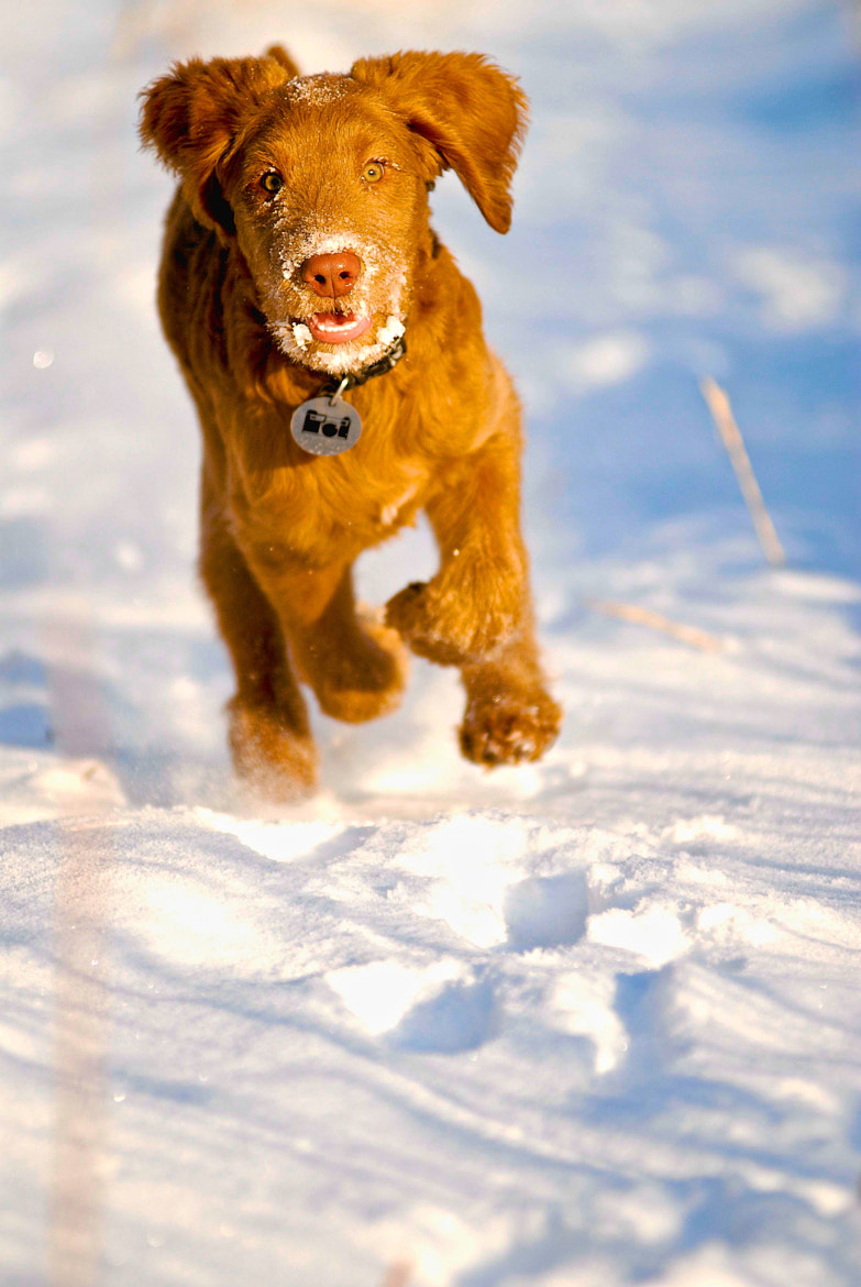 Photograph Nikon Running in the Snow. by DAN Hebert on 500px