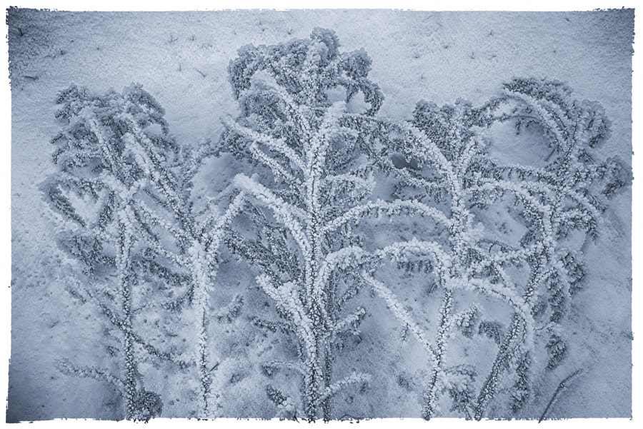 Photograph IN FROST WE UNITE by Duschan Tomic on 500px