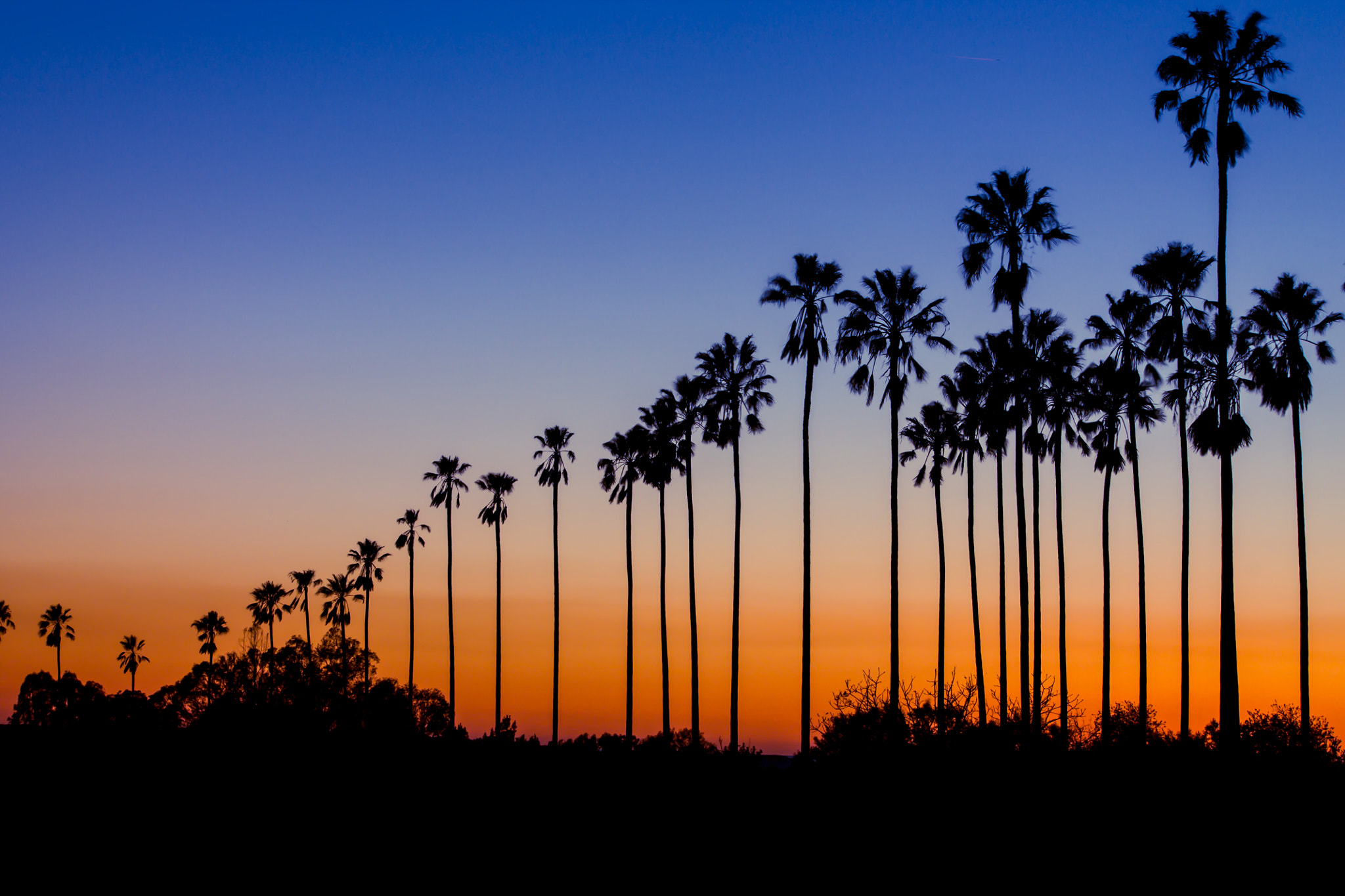 Photograph Palm Trees at Sunset by Chris Meier on 500px
