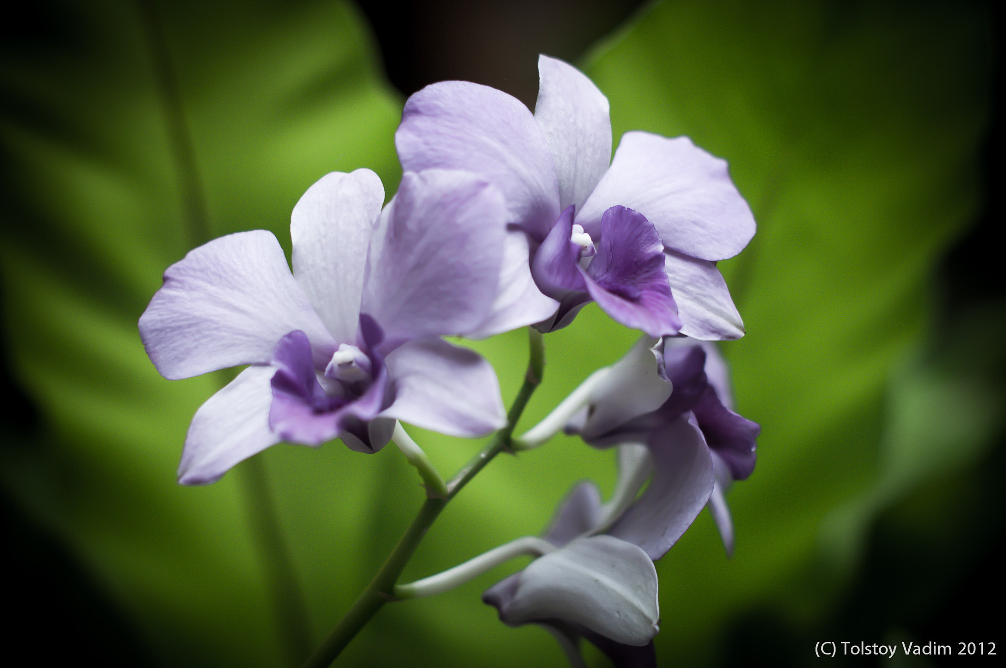Photograph excellence violet by Vadim Tolstoy on 500px
