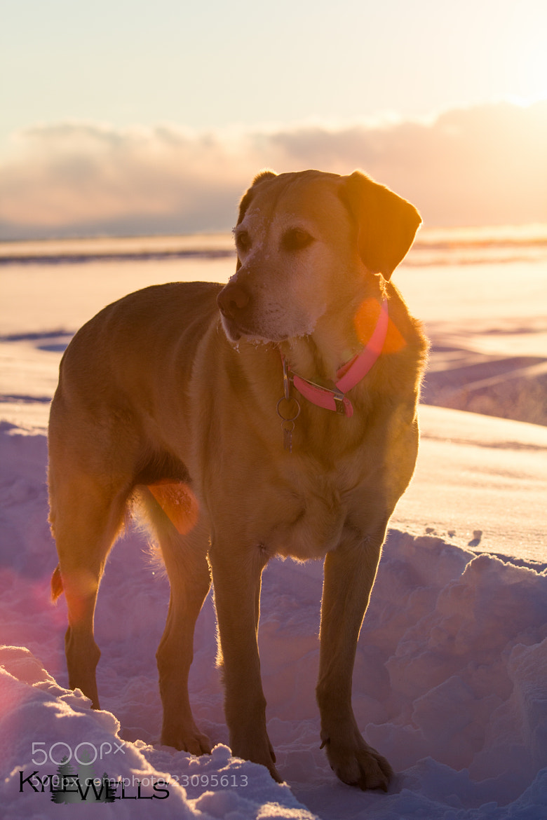Photograph Puppy Flare by Kyle Wells on 500px