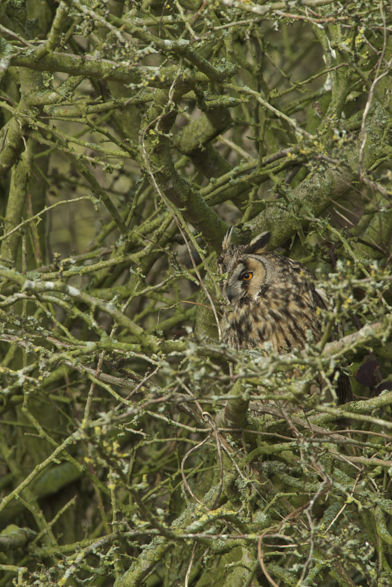 Photograph Long Eared Owl by Ken Clark on 500px