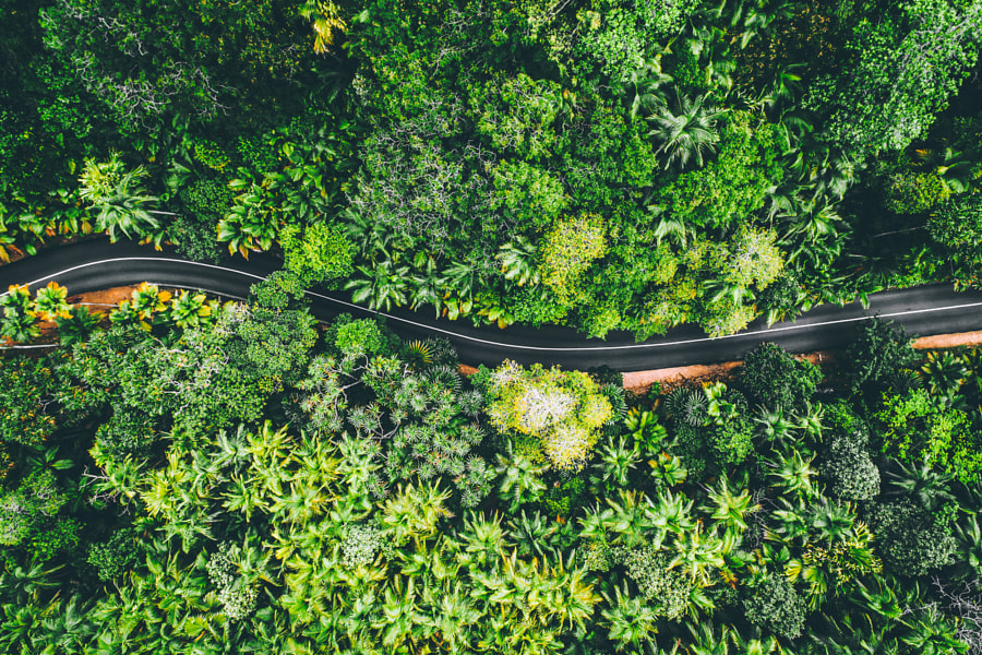 Jungle Road by Tobias Hägg on 500px.com