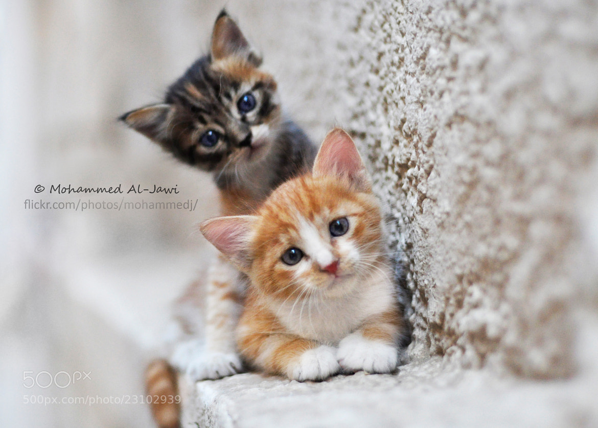 Photograph Two cats by  Mohammed Al-Jawi on 500px