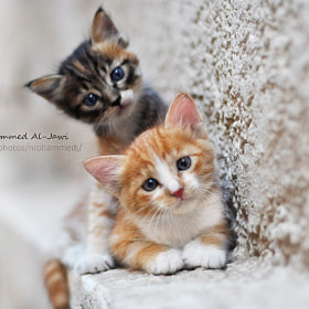 Two cats by  Mohammed Al-Jawi   (MohammedAl-Jawi)) on 500px.com