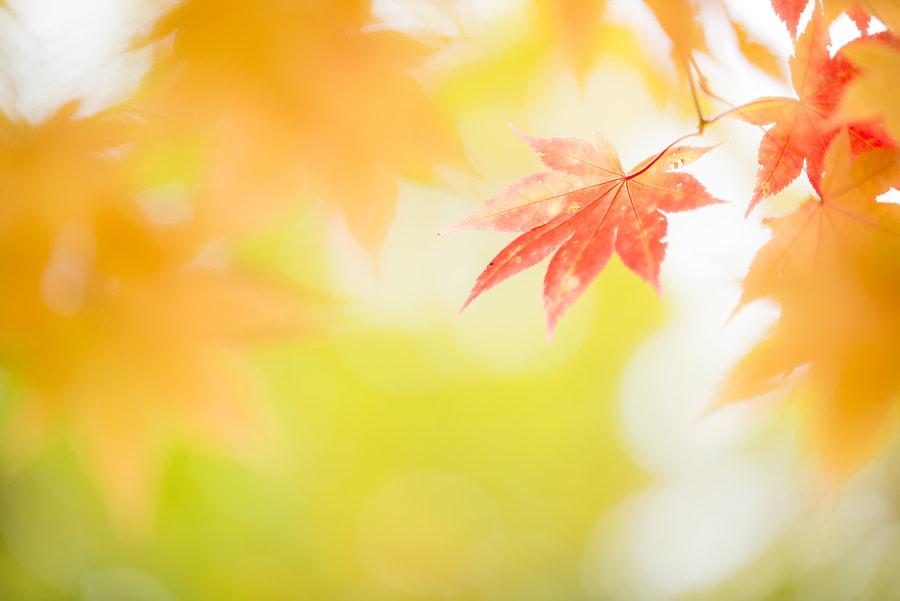 500px.comのKousuke Toyoseさんによる紅葉
