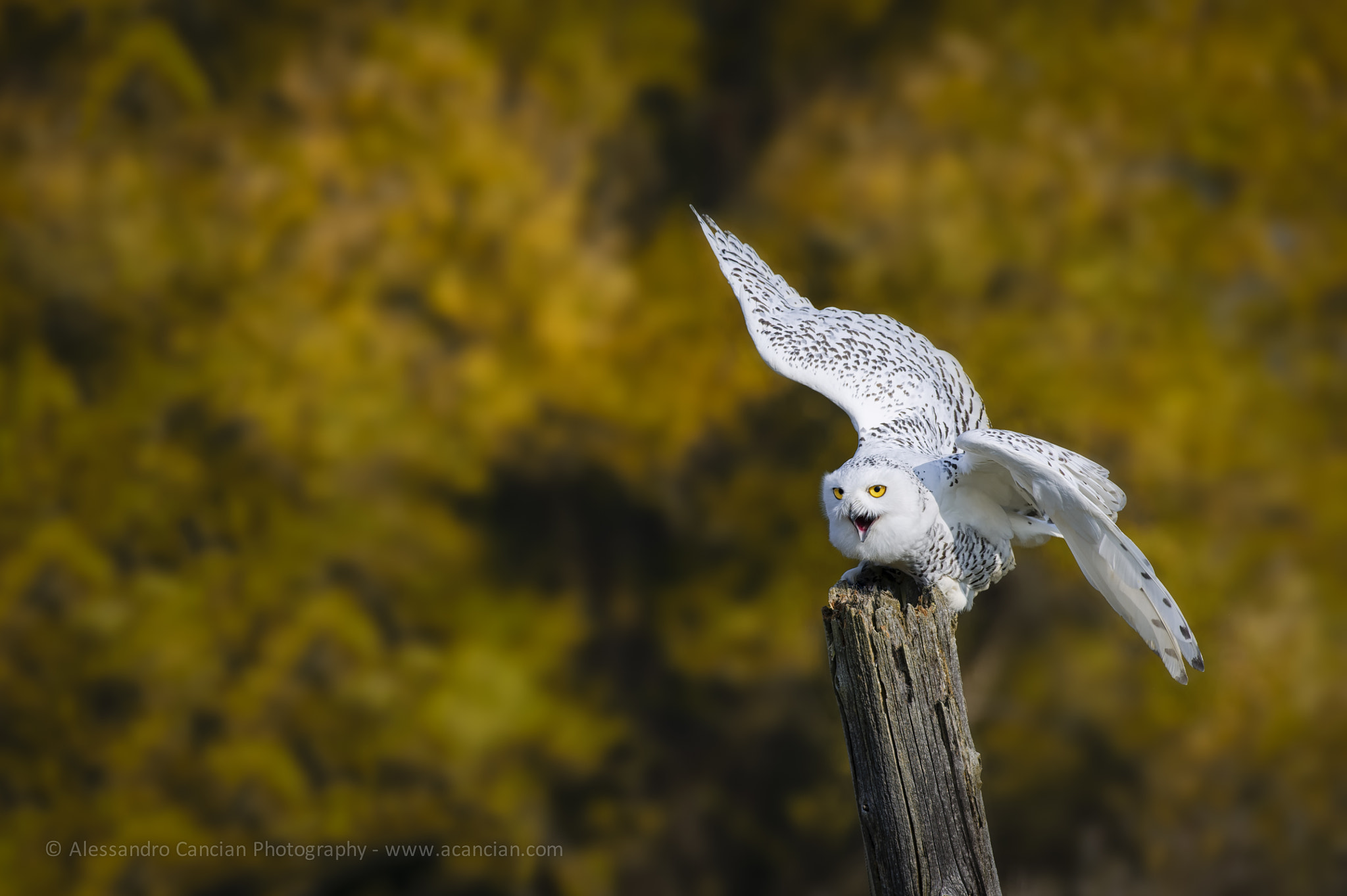 Photograph Ready for takeoff! by Alessandro Cancian on 500px