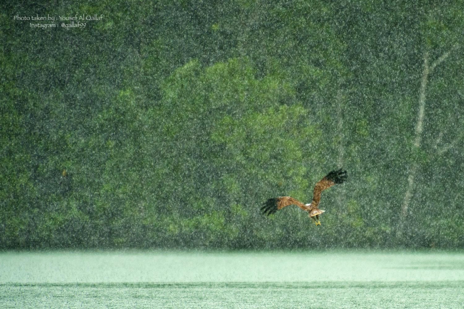 Photograph Under the rain by Yousef Al Qallaf on 500px