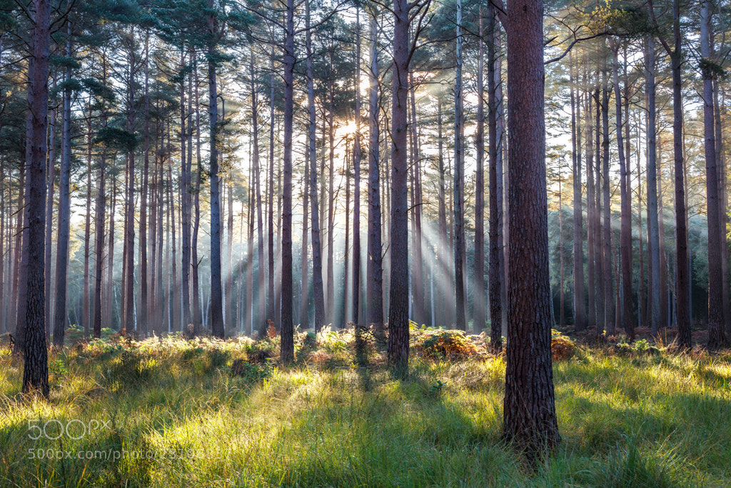 Photograph The New Forest, Hampshire by Simon Byrne on 500px