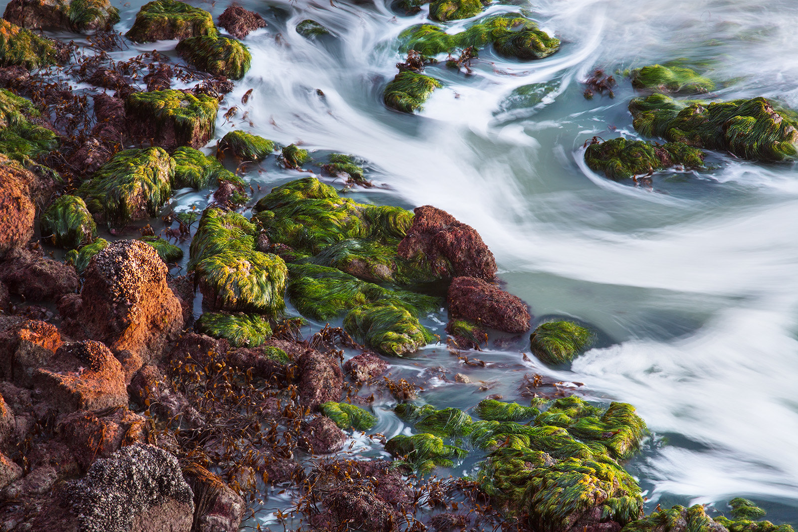 Photograph Seaweed by Ryan Fernandez on 500px