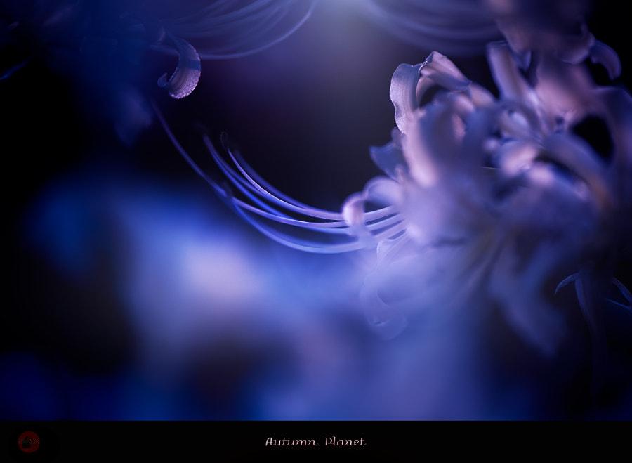 Autumn Planet by Kiyoshi Iida on 500px