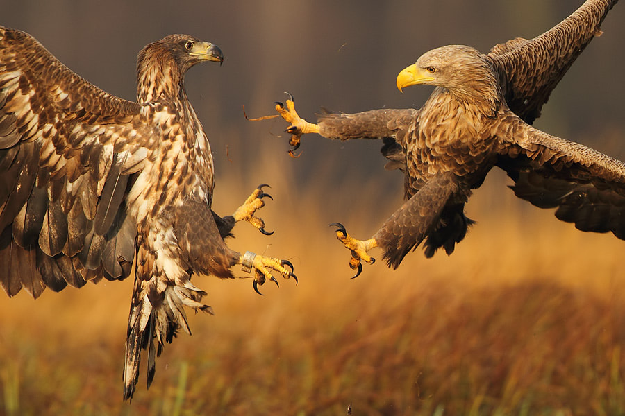 Photograph Fight by Marcin Nawrocki on 500px
