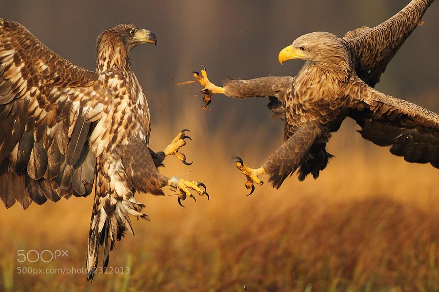Photograph Fight by Marcin Nawrocki on 500px