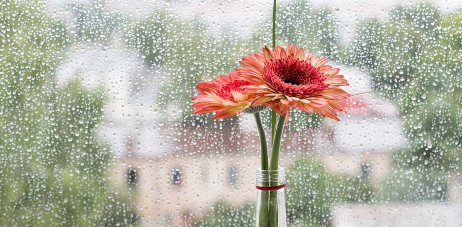 Flower by Kintija Andersone on 500px.com