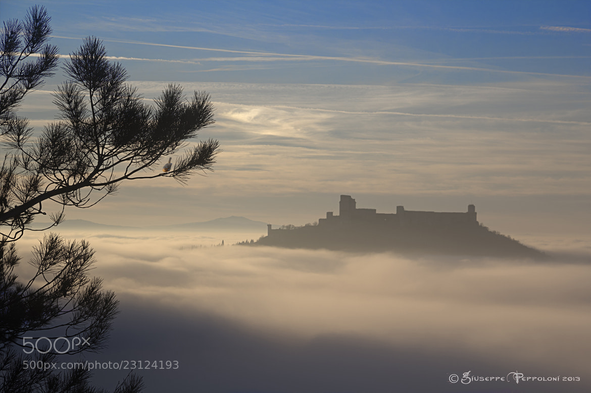Photograph The fortress of Assisi (PG by Giuseppe  Peppoloni on 500px