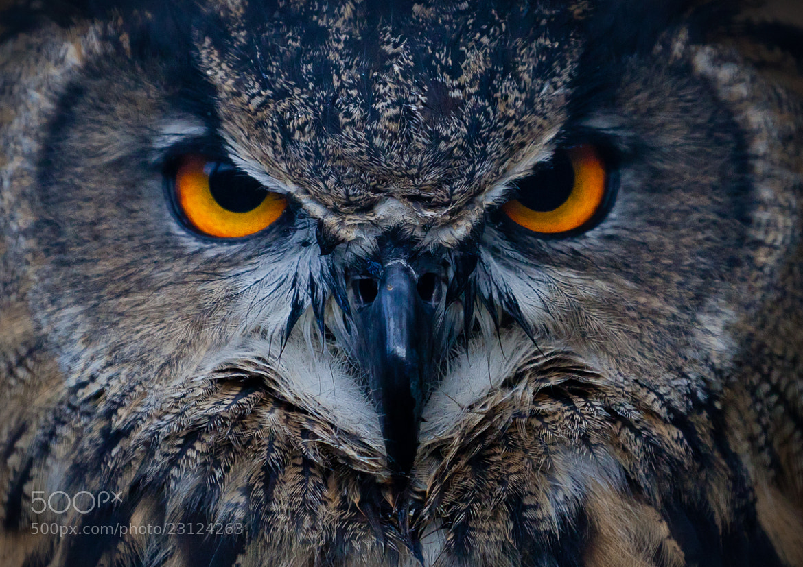 Photograph Stare by Andrew Johns on 500px
