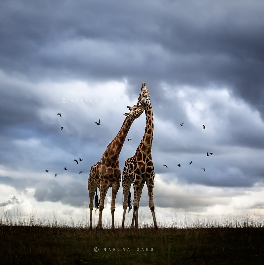 Photograph Wildscape by Marina Cano on 500px