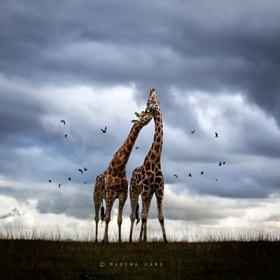 Wildscape by Marina Cano on 500px.com