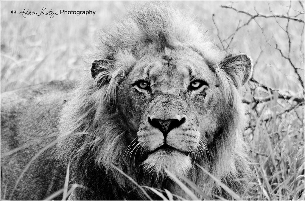 Photograph The Look by Adam & Samantha Kotze on 500px