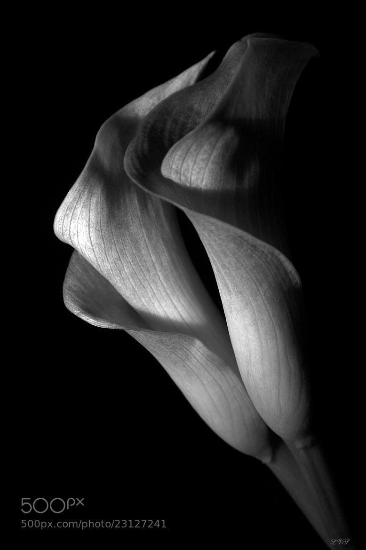 Photograph natural curves by Lillian Vazquez (Sanllehi) on 500px