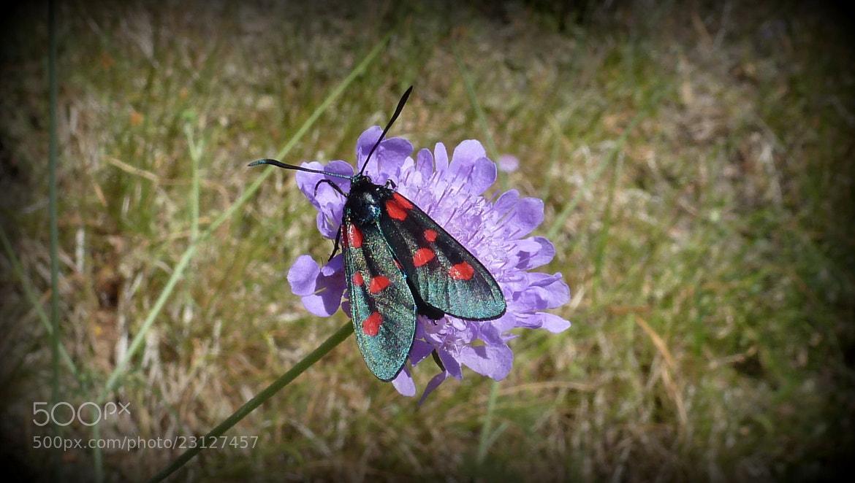 Photograph Natura   Piccola Farfalla by Ulderico Pontini on 500px