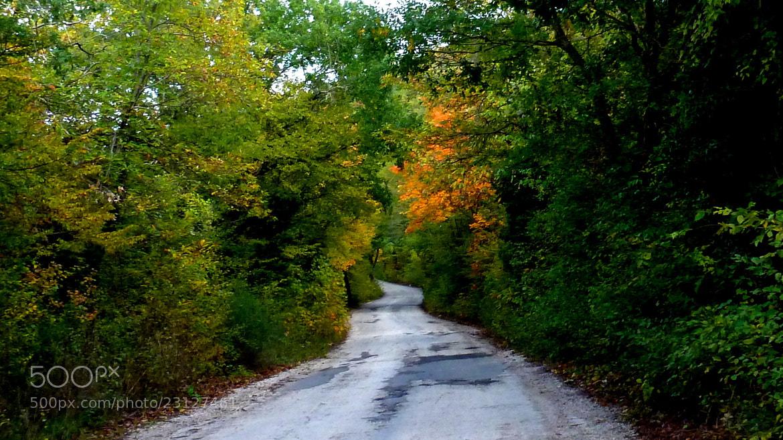 Photograph Strada nel bosco by Ulderico Pontini on 500px