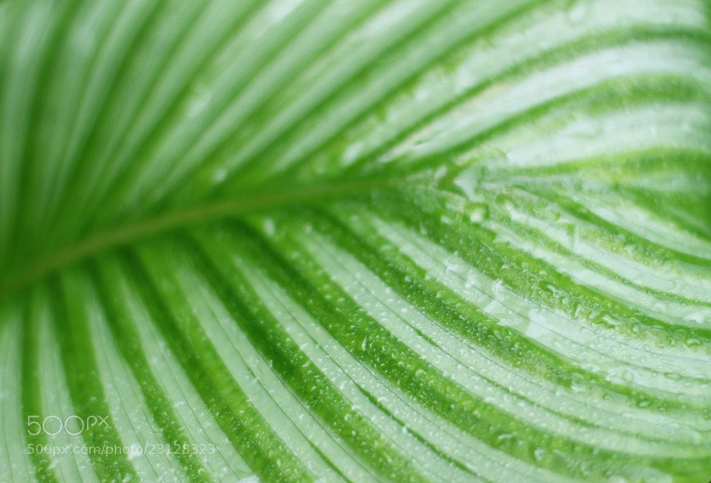 Photograph Green plant by Hiroshi Machidori on 500px