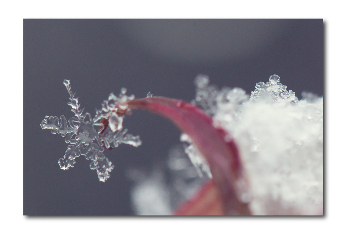 Photograph Snow by Penny Myles on 500px