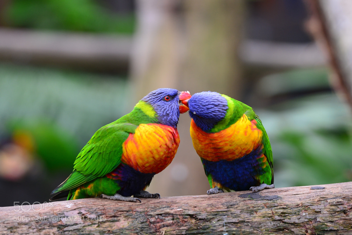 Photograph Love Birds by Lin Zee on 500px