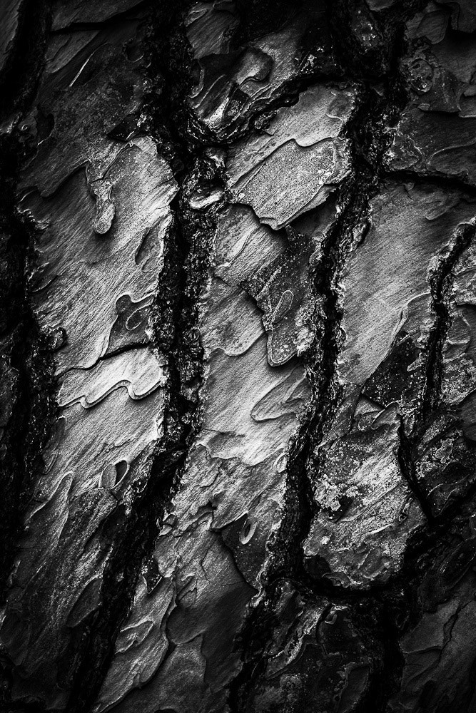 Photograph Trees n.3 by Corrado Grasso on 500px
