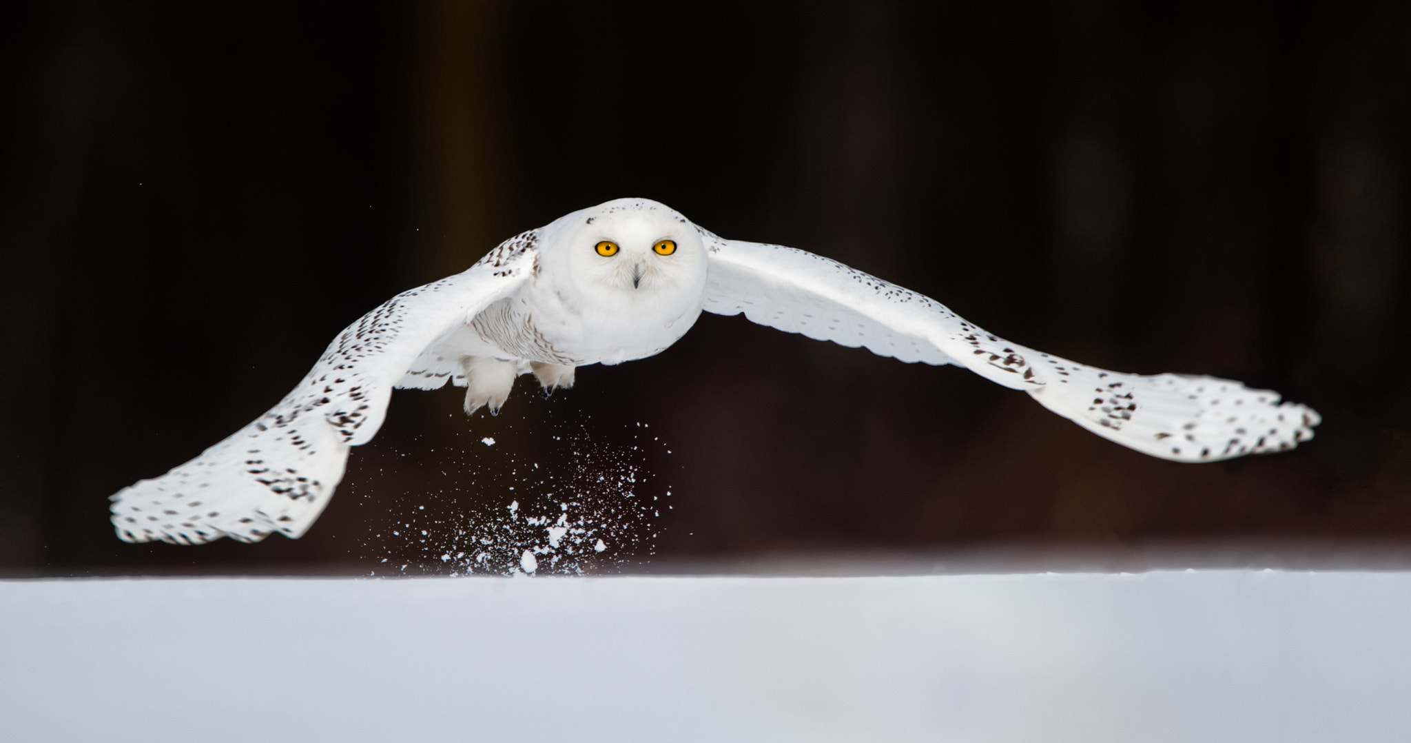 Photograph Snowy Takeoff by Christopher Cove on 500px