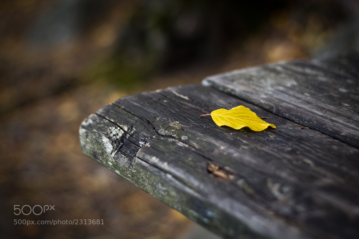 Photograph The yellow leaf by Robin Dahling on 500px