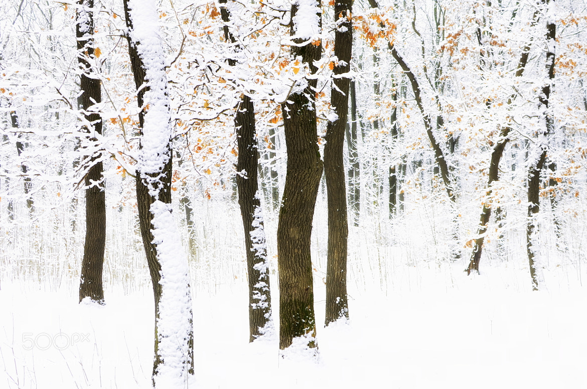 Photograph Winter in the woods by Claudia Gadea on 500px