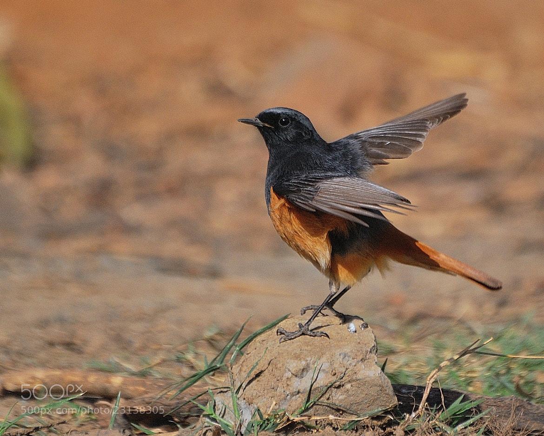 Photograph Untitled by Pradeep Joshi on 500px