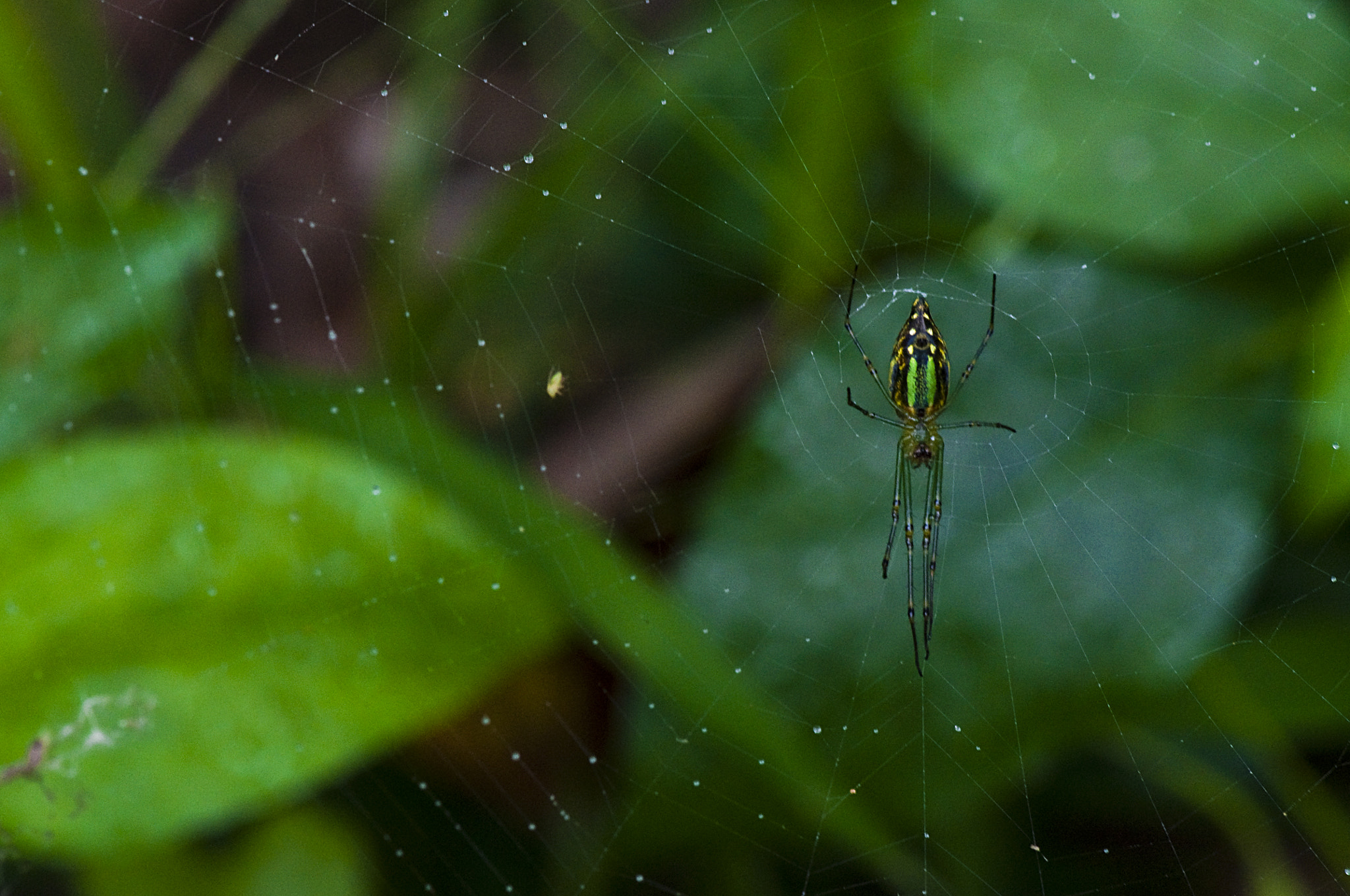 Photograph spider by Cesar Samiano on 500px