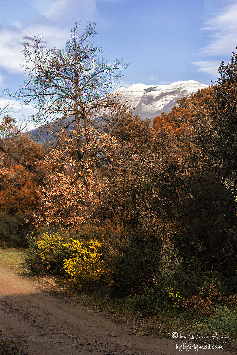 Photograph forests and icy mountains by Mireia Ecija on 500px