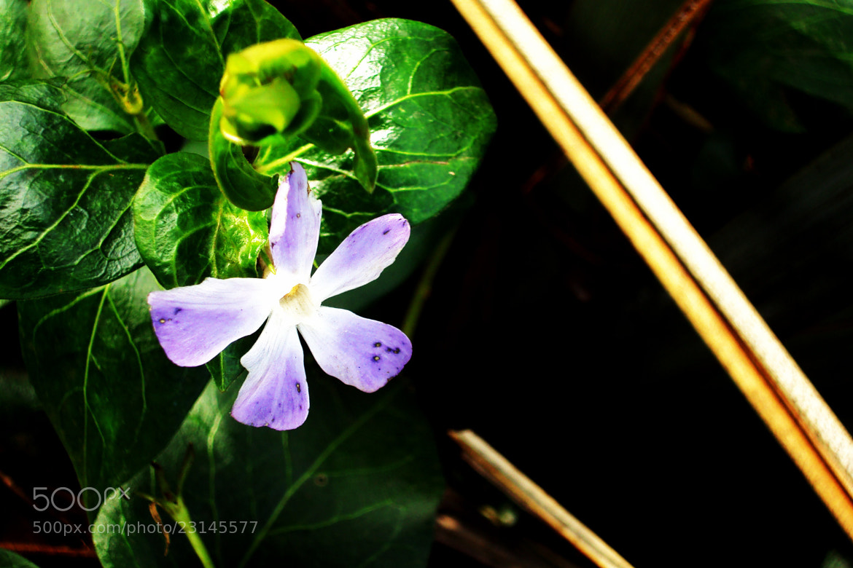 Photograph Flower by Joanna Zawistowska on 500px