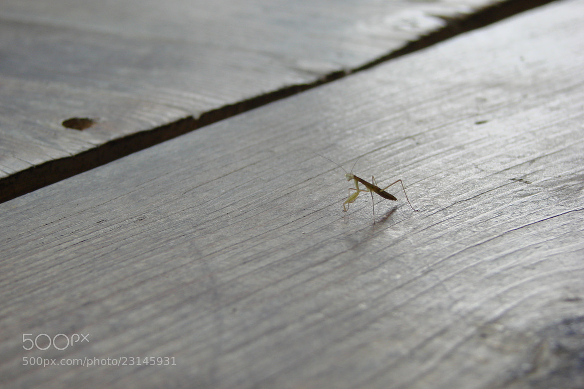 Photograph Mantis on the floor by Conor O'Reilly on 500px