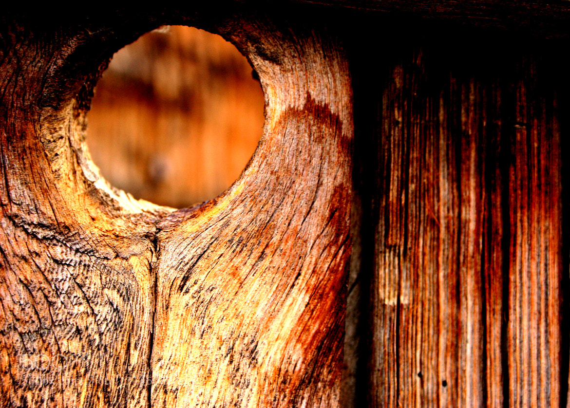 Photograph Looking Through by Brian Maheux Photography on 500px