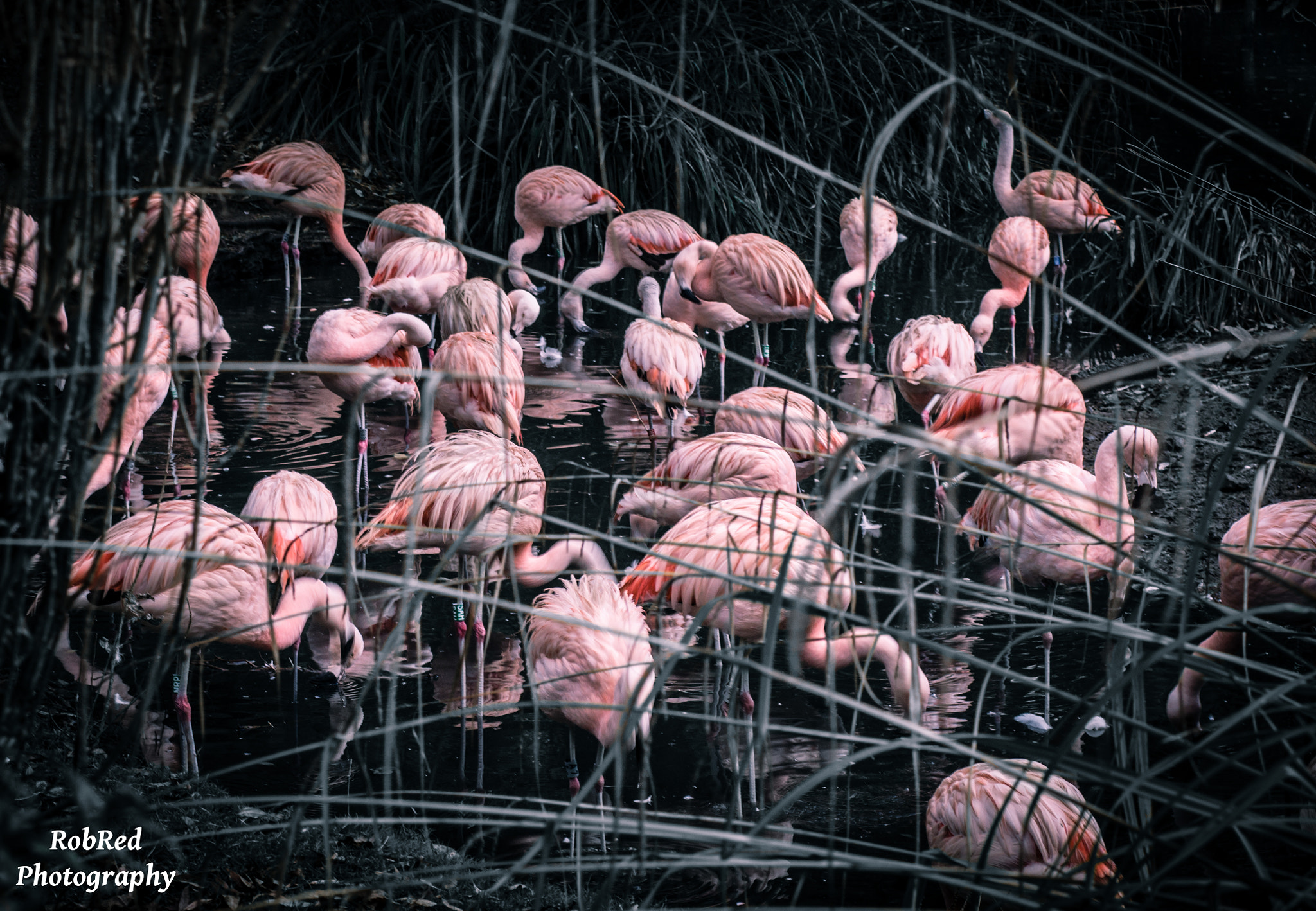 Photograph Creatures Of Pink by Robert Redmond on 500px