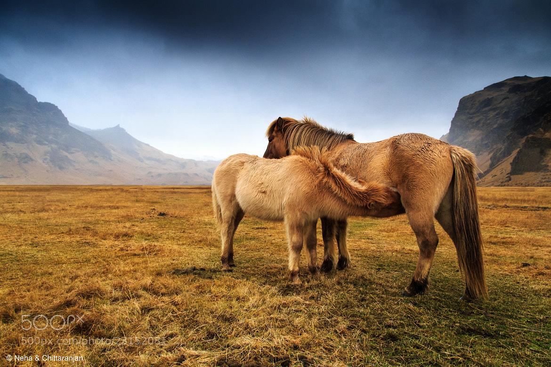 Photograph Mother & Foal by Neha & Chittaranjan Desai on 500px