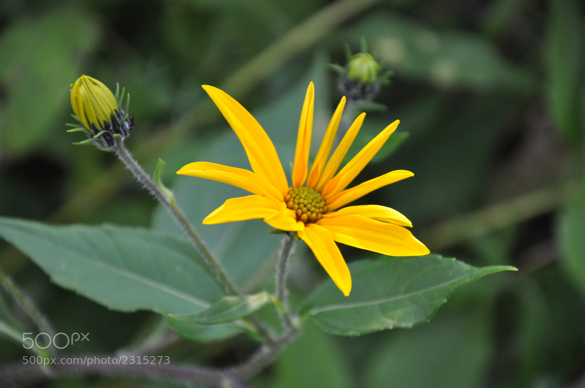 Photograph Flower by Anna Kot on 500px