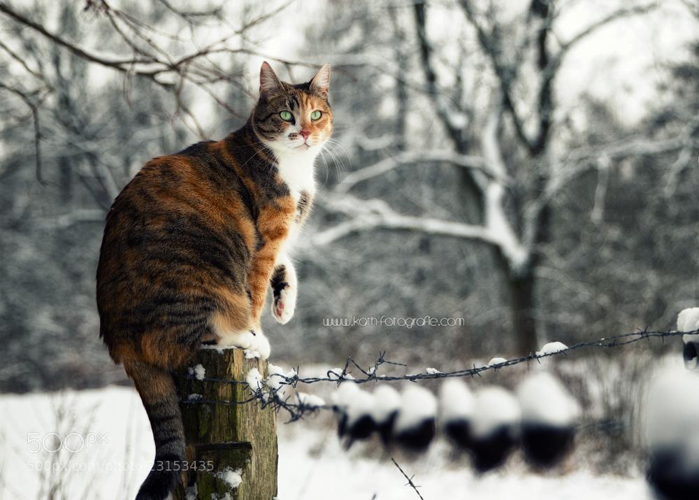 Photograph Jade  by Kath´s Fotografie on 500px