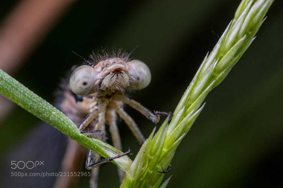 Ug Bug!