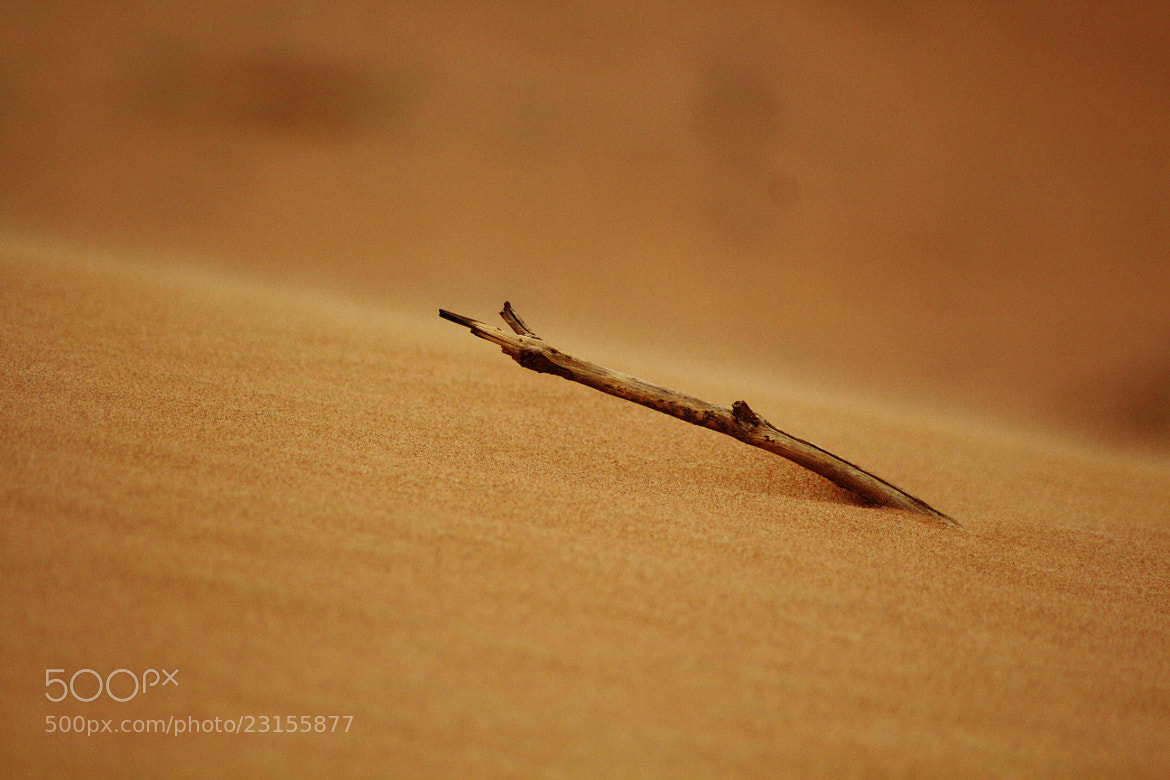Photograph sand and a stick  by Abdulla  Rasti on 500px